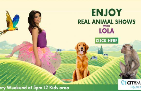Real Animal Shows